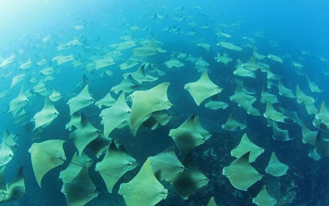 Denizlerdeki Zehirli Hayvanlar