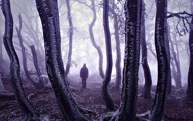 Dünyanın en güzel gizemli ormanları!