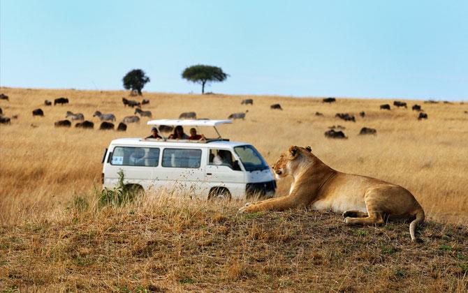 Afrika tatilinizde safari için en iyi 3 yer!