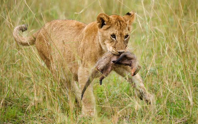 """Vahşi yaşamın ulusal parkı """"Serengeti"""""""