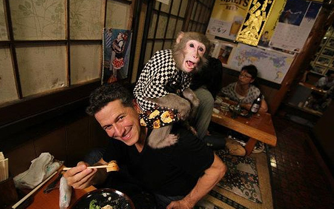 Maymun garsonlarla yemek deneyimi !