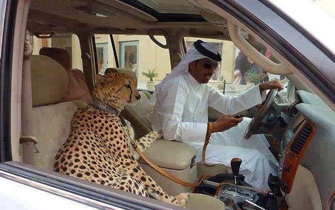 Yalnızca Dubai'de görülebilecek ilginç kareler