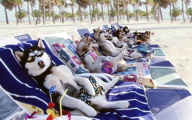 Köpeğinizi yaz sıcaklarından korumanız için öneriler!