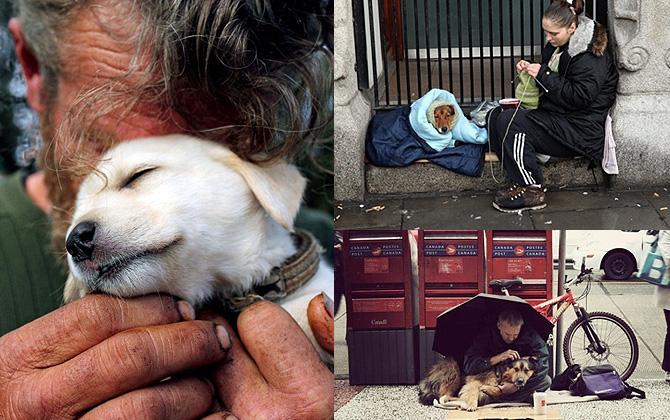 Köpeklerin ne kadar sadık olduklarını kanıtlayan 12 fotoğraf!