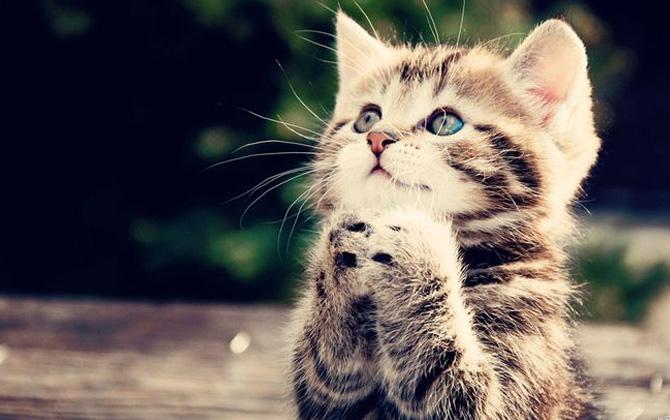 Kedinizi anlamak ister miydiniz?