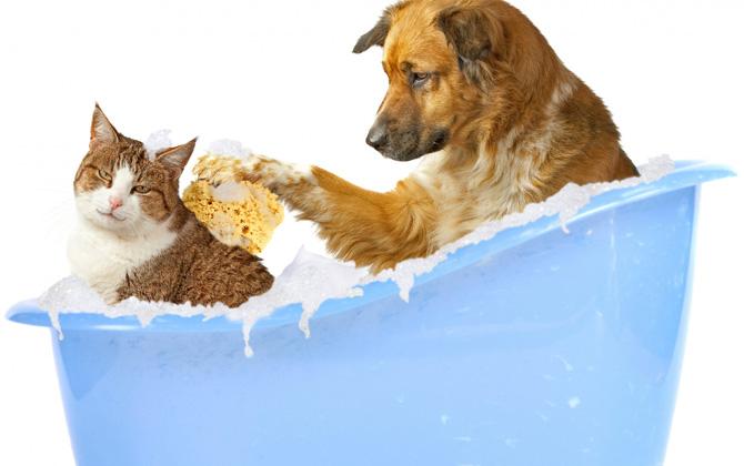 Kedileri yıkamak doğru mudur?