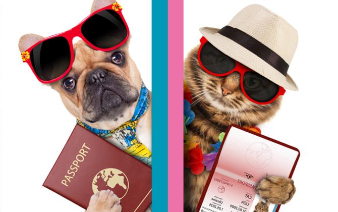 Evcil Hayvan Pasaportu ile ilgili bilmeniz gerekenler!