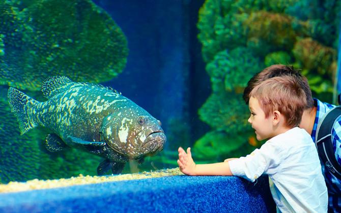 Çocuklarınızla birlikte tatilde keşfedebileceğiniz akvaryumlar!