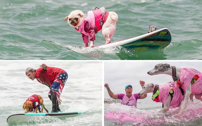 Geleneksel Sörf Yapan Köpekler Yarışması, bu yıl California Imperial Beach'te gerçekleşti!